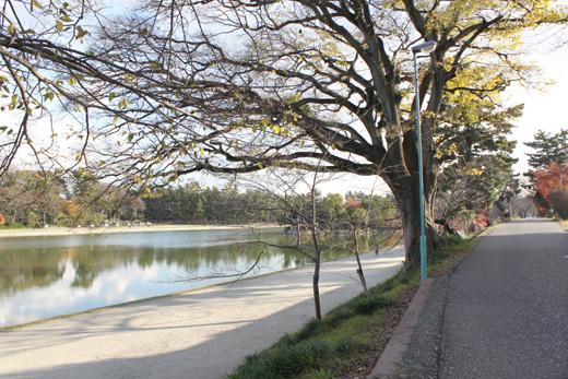 天王川公園の景観